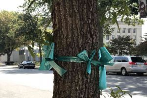 Trenton New Jersey Tree Teal Ribbon