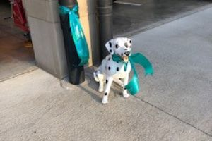 Upper Arlington OH Teal Dalmation Statue